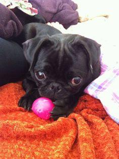 adorable puppy!!! <3