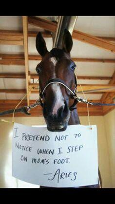 How True.....  #equestrian#equestrianproblems#horses#horse