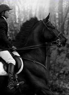 Horse hair is a natural material which is in harmony with human skin | At saçı (at kılı) insan teniyle uyumlu doğal bir malzemedir.