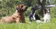 How to help dogs get along - Cesar's Way