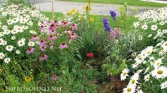 How to grow a dream garden on $100 a year. Encouragement for frugal gardeners!