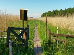 Lammassaari island just a short bus or tram ride from Helsinki city centre, in the protected area of Viikki and Vanhankaupunginlahti, is a perfect green getaway in the city.A canal full of fish div…