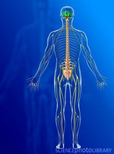 HomeoCity: Nervous System Disorders