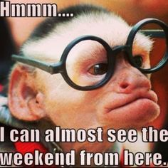 I can almost see the weekend from here. #monkey #meme