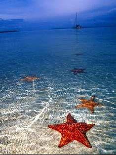 Estrellas de mar en Costa Rica