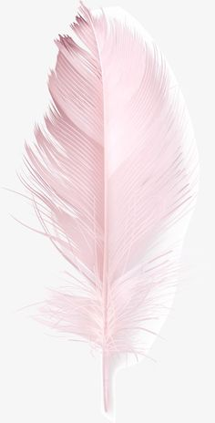 Pink Feather, Pink, Feather, Hair PNG and Vector with Transparent Background for. Feather Wallpaper, Flower Background Wallpaper, Flower Phone Wallpaper, Pink Wallpaper Iphone, Gold Wallpaper, Flower Backgrounds, Colorful Wallpaper, Aesthetic Iphone Wallpaper, Galaxy Wallpaper