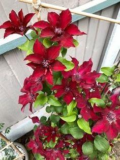 Christmas Wreaths, Gardening, Holiday Decor, Plants, Home Decor, Balcony, Holiday Burlap Wreath, Lawn And Garden, Flora