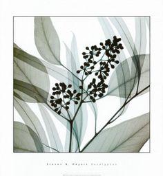 Eucalyptus by Steven N. Meyers (also available framed from Kohl's)