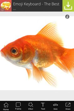 9 Best Breadth inspirations images in 2014 | Goldfish, Red fish, Bubbles