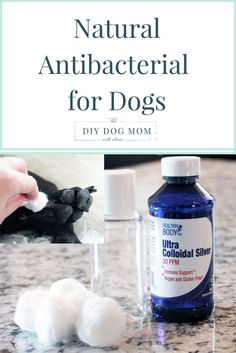 Colloidal Silver: Natural Antibacterial for Dogs | holistic dog care, dog health, dog tips, dog care, dog care tips