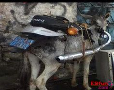 Look at that Pakistani Funny 125cc Donkey Picture its really amusing.