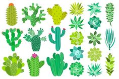 Cactus and succulent vector set By Just create