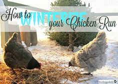 How To Winterize Your Chicken Run
