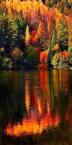 Autumn Color Reflections
