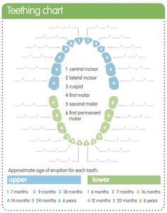 when do most babies start teething – Everything About Babies Baby Teething Chart, Tooth Chart, Psychology Disorders, Teeth Bleaching, Natural Teeth Whitening, White Teeth, Baby Milestones, Baby Love, Activities For Kids