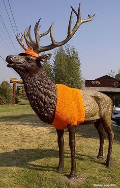 yarn bombing Wyoming style