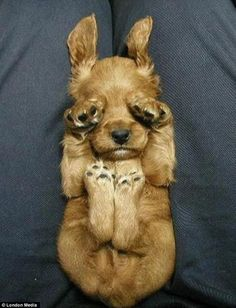 The Bizarre Ways That Dogs Like To Sleep - check out the others SO CUTE!!