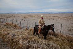 montana cowboys - Google Search