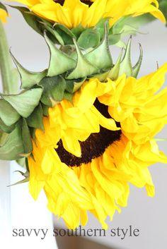 Savvy Southern Style: Trader Joe's Sunflowers