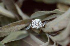 Emily + Jason | A Perfect Washington DC Engagement | Candice Adelle Wedding + Family Photography | VA DC MD Photographer