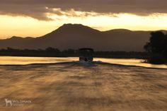 Boat cruising up the Zambezi river. South Africa, Safari, Most Beautiful, Cruise, African, Boat, River, Sunset, Landscape