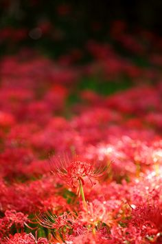 "500px / Photo ""Red Carpet"" by Ken Shimo"