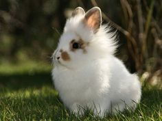 OMG I need one!!!! Lion hair bunny since we can't have dogs and Keegan is allergic to cats