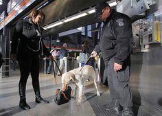 16/04 - Cão da polícia fareja bolsa em estação de Boston um dia após as explosões que deixaram mortos e feridos em uma maratona na cidade