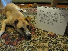Dog Shaming features the most hilarious, most shameful, and never-before-seen doggie misdeeds. Join us by sharing in the shaming and laughing as Dog Shaming reminds us that unconditional love goes both ways. Funny Dog Memes, Funny Dogs, Cute Dogs, Dog Humor, Funny Animal Pictures, Dog Pictures, Funny Animals, Animal Pics, Adorable Animals