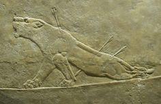 Dying Lioness (Assyrian, Assurbanipal, British Museum, London)
