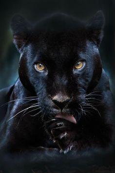 #animais selvagens