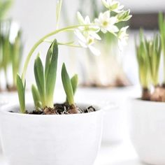 Welcome Spring, Spring Sign, Spring Home, Spring Day, Happy Spring, Hello Spring, Garden Bulbs, Planting Bulbs, Spring Flowers