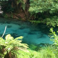 Blue Spring - New Zealand