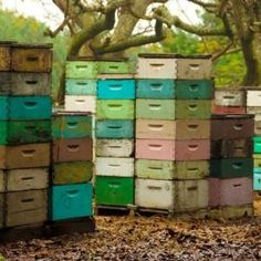 bee hives-- I love Julie Summersquash-- she has a fabulous eye. Following her makes me happy. The colours here are a wonderful palette of many of my favourite colours ever.