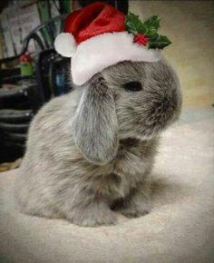 Kerstdier