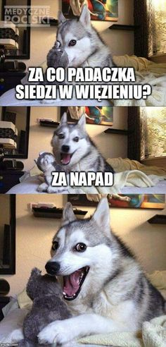 14 Best Jokes From Pun Husky - Jokes - Funny memes - - Why Did Mozart Killed His Chicken? The post 14 Best Jokes From Pun Husky appeared first on Gag Dad. Pun Husky, Husky Jokes, Dog Jokes, Puns Jokes, Animal Jokes, Funny Animal Memes, Funny Puns, Funny Animal Pictures, Funny Shit