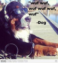 Wisdom dog words