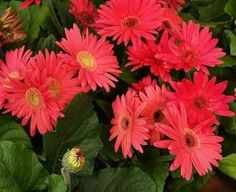 Favorite flowers!