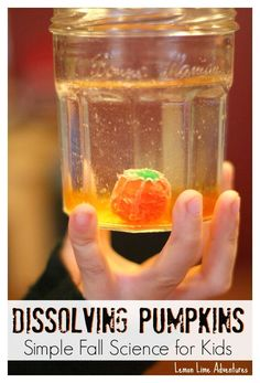 Dissolving pumpkin candy experiment. Add some fall festiveness to your science class!