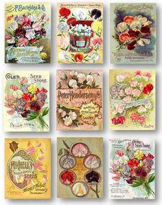 Sweet Peas Vintage Flower Seed Catalogue by PrintcessArtPrints