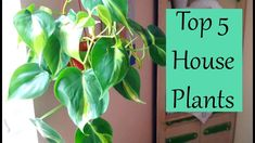 Today I'm sharing with you my top 5 house plants that I'm loving right now. All of these are very easy to take care of and do well in low to medium light. Easy House Plants, Florida Gardening, Top, Videos, Youtube, Home Decor, Decoration Home, Room Decor, Interior Design