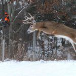 buck jumping over fe buck jumping over fence in front of a gun hunter Bow Hunting Deer, Quail Hunting, Deer Hunting Blinds, Hunting Guns, Whitetail Hunting, Deer Information, Deer Jumping, Hunting Humor, Funny Hunting