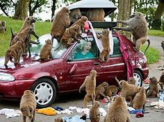 The Invasion The Moments That Zoo Animals Decided To Take Hilarious Revenge • BoredBug