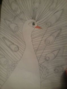 My peacock I drew at school