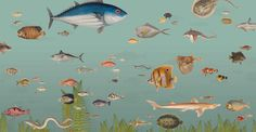 ZOO: behang 'vissen' afmetingen 5m x 2.6m / wallpaper 'fish' size 5m x 2.6m