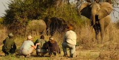 Safari to Time and Tide Luwi with Africa Travel Resource Kenya Travel, Africa Travel, African Vacation, Safari Holidays, Travel Tickets, Elephant Walk, Safari Adventure, Out Of Africa, Beautiful Places To Visit