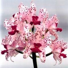 fotos_orquideas_especiales.jpg