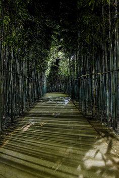 Camino de bambú cerca de Daegu, Corea del Sur