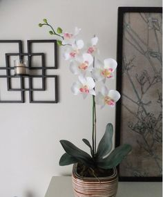 26 Silk Butterfly Phalaenopsis Orchid by FineOrchidCreations