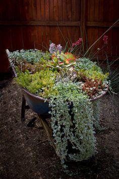 Wheelbarrow planting